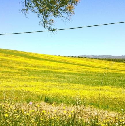 estrada das flores amarelas